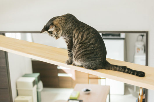 広い居間を眺めるペットのネコ